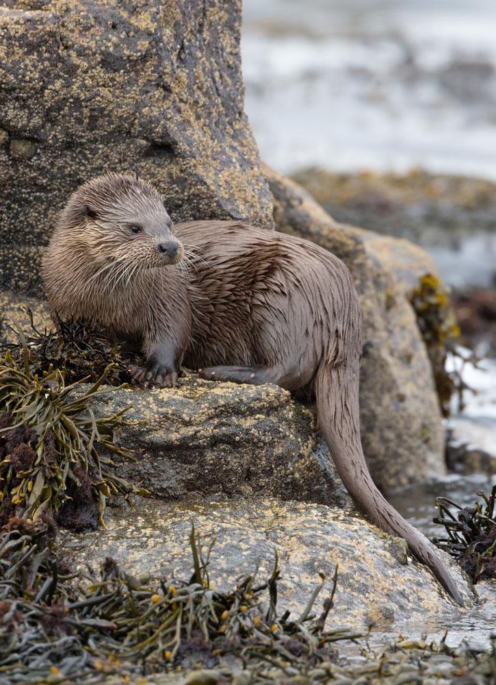 OtterTrailer