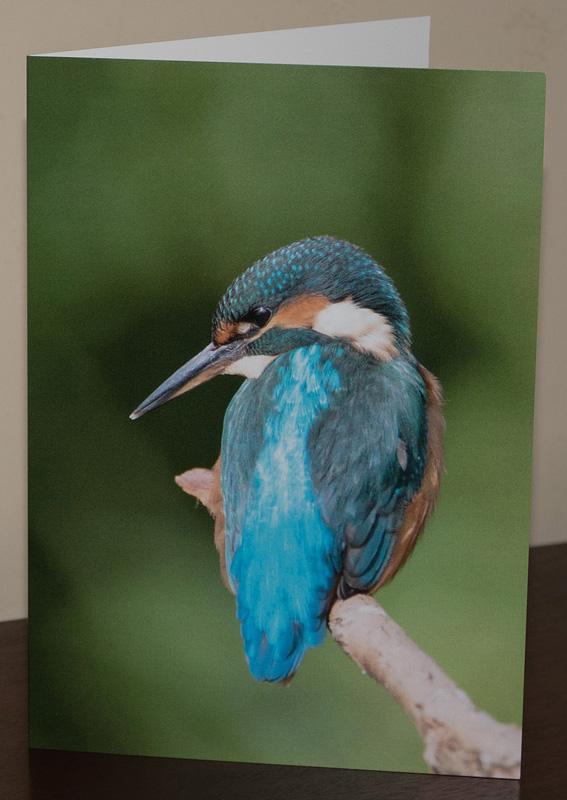 KingfisherCard