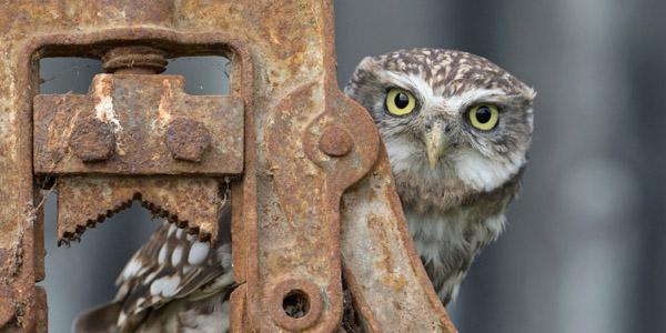 Workshops - Little Owls
