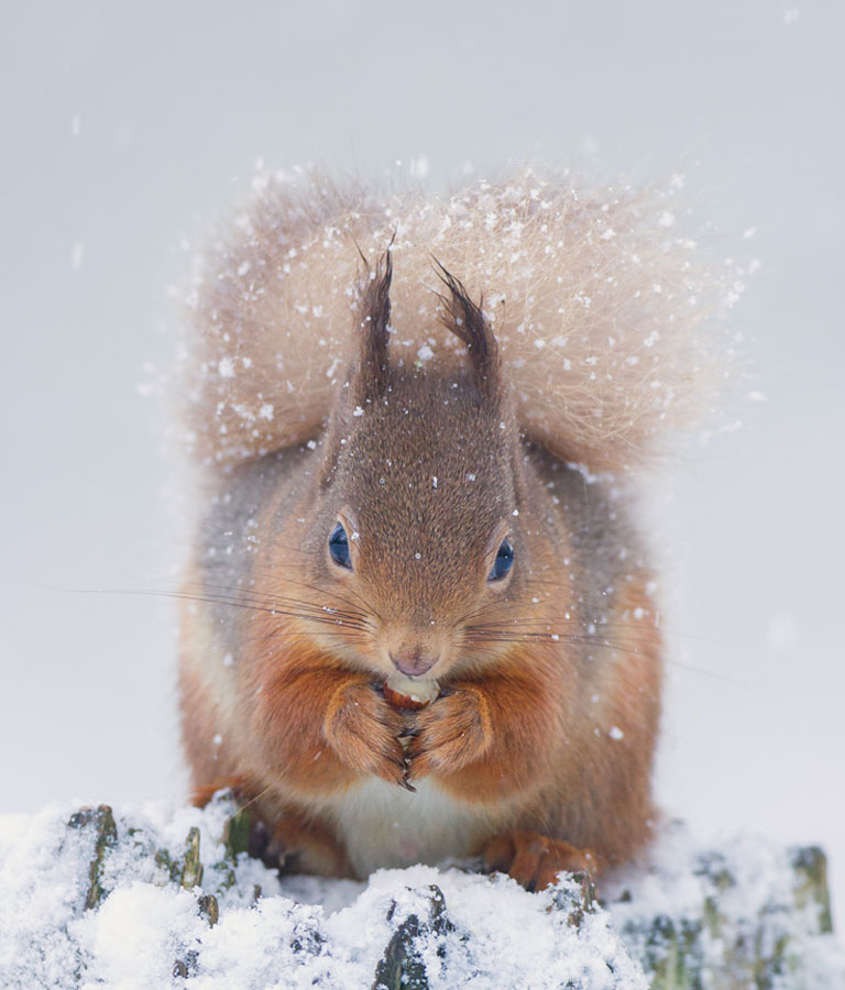 Squirrel_LinkImage