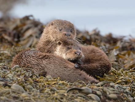 OtterStack